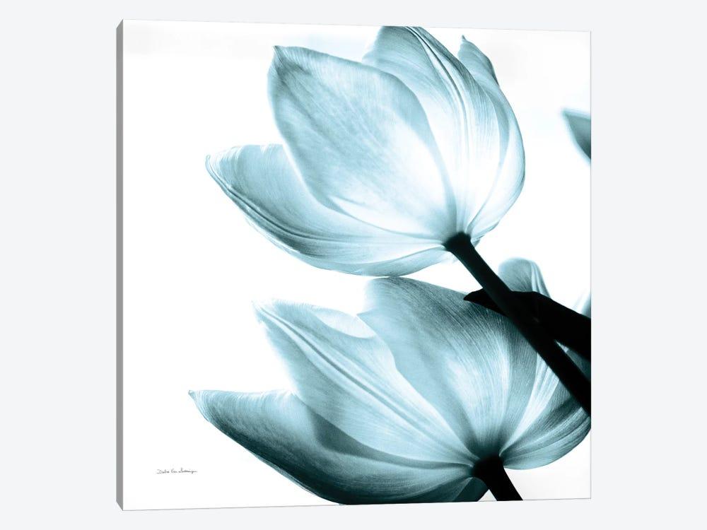 Translucent Tulips II In Aqua by Debra Van Swearingen 1-piece Art Print