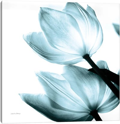 Translucent Tulips II In Aqua Canvas Art Print