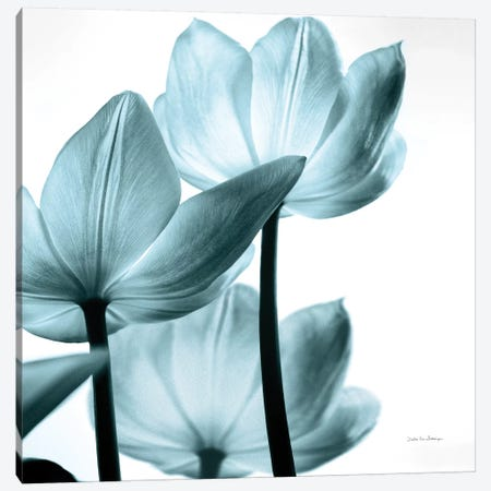 Translucent Tulips III In Aqua Canvas Print #WAC6051} by Debra Van Swearingen Canvas Art Print