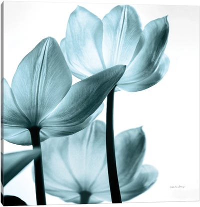 Translucent Tulips III In Aqua Canvas Art Print