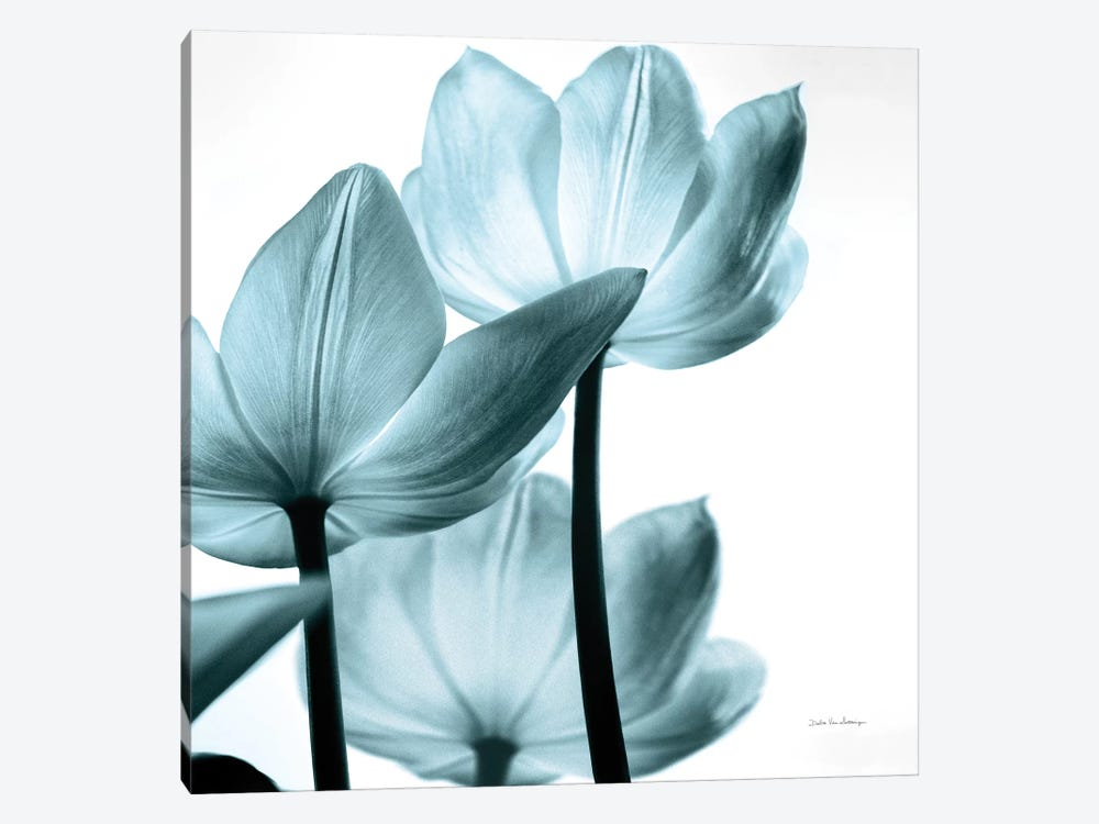 Translucent Tulips III In Aqua by Debra Van Swearingen 1-piece Canvas Artwork