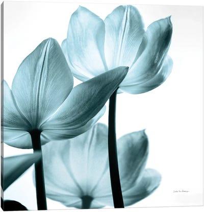 Translucent Tulips III In Aqua Canvas Art Print