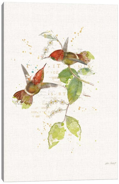 Colorful Hummingbirds II Canvas Print #WAC6095