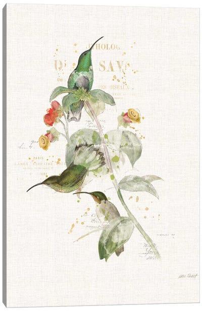 Colorful Hummingbirds III Canvas Art Print