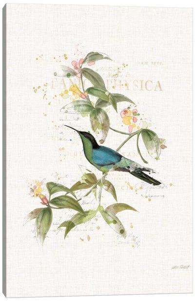 Colorful Hummingbirds IV Canvas Art Print