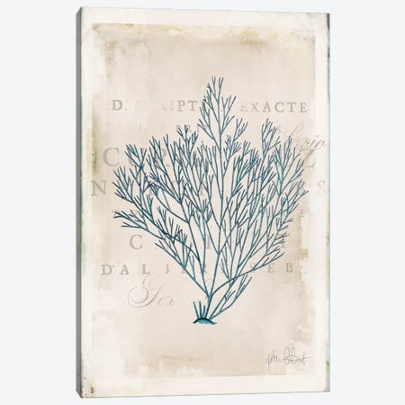 Sea Garden II Canvas Print #WAC6107} by Katie Pertiet Canvas Wall Art
