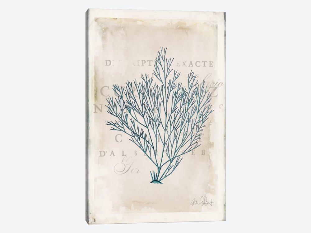 Sea Garden II by Katie Pertiet 1-piece Canvas Artwork