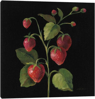 French Fruit Series: Fraise Canvas Print #WAC6356