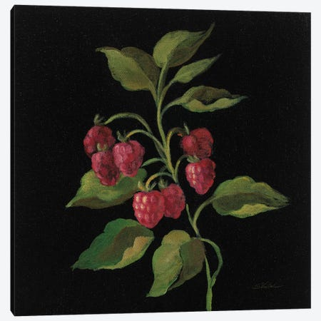 Framboise Canvas Print #WAC6357} by Silvia Vassileva Canvas Art Print