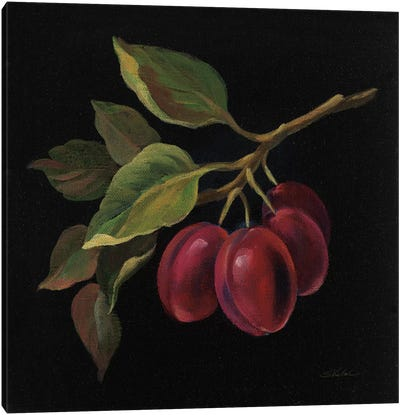 French Fruit Series: Prune Canvas Print #WAC6358
