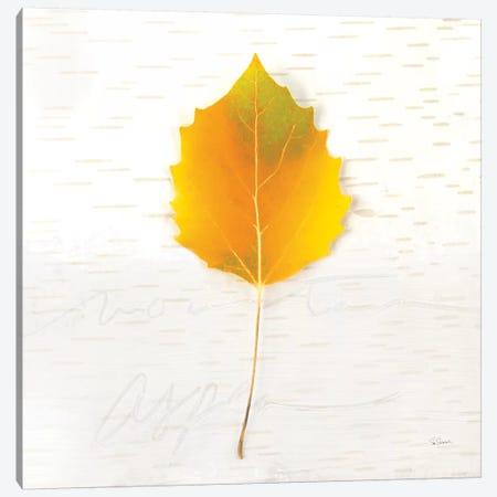 Autumn Colors III Canvas Print #WAC6407} by Sue Schlabach Canvas Print