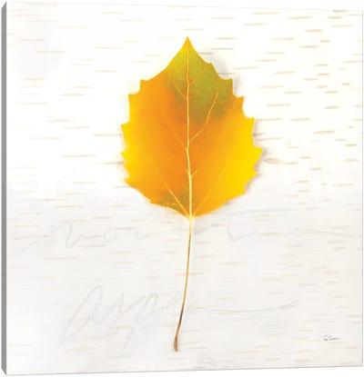 Autumn Colors III Canvas Art Print