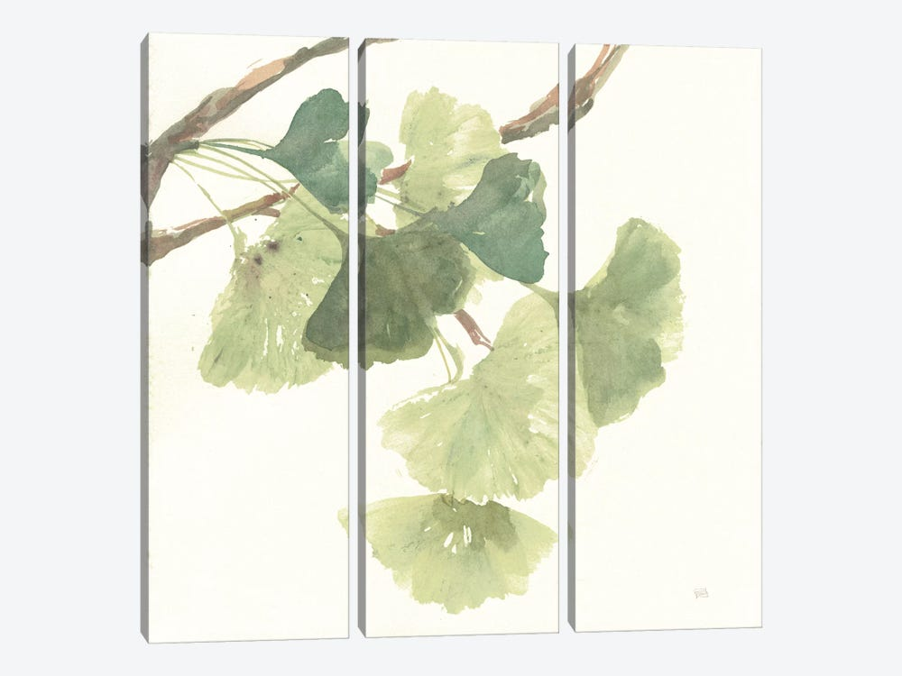 Light Gingko Leaves I by Chris Paschke 3-piece Canvas Artwork