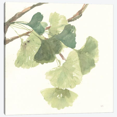 Light Gingko Leaves I Canvas Print #WAC6436} by Chris Paschke Canvas Art