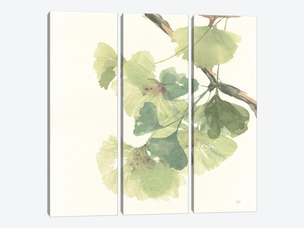 Light Gingko Leaves II by Chris Paschke 3-piece Art Print