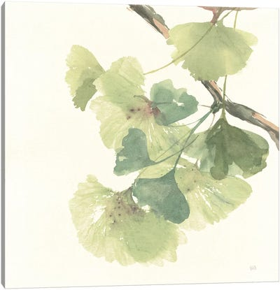 Light Gingko Leaves II Canvas Art Print