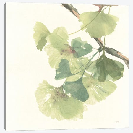 Light Gingko Leaves II Canvas Print #WAC6437} by Chris Paschke Canvas Artwork