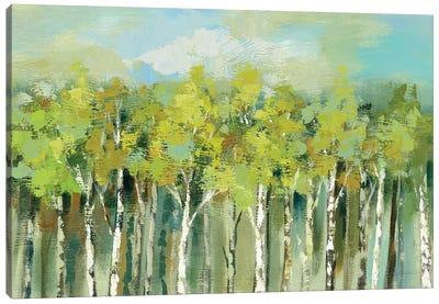April Tree Tops Canvas Print #WAC6508