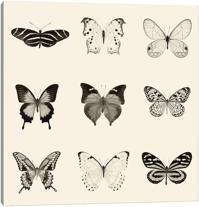 Butterfly Patch In B&W Canvas Art Print