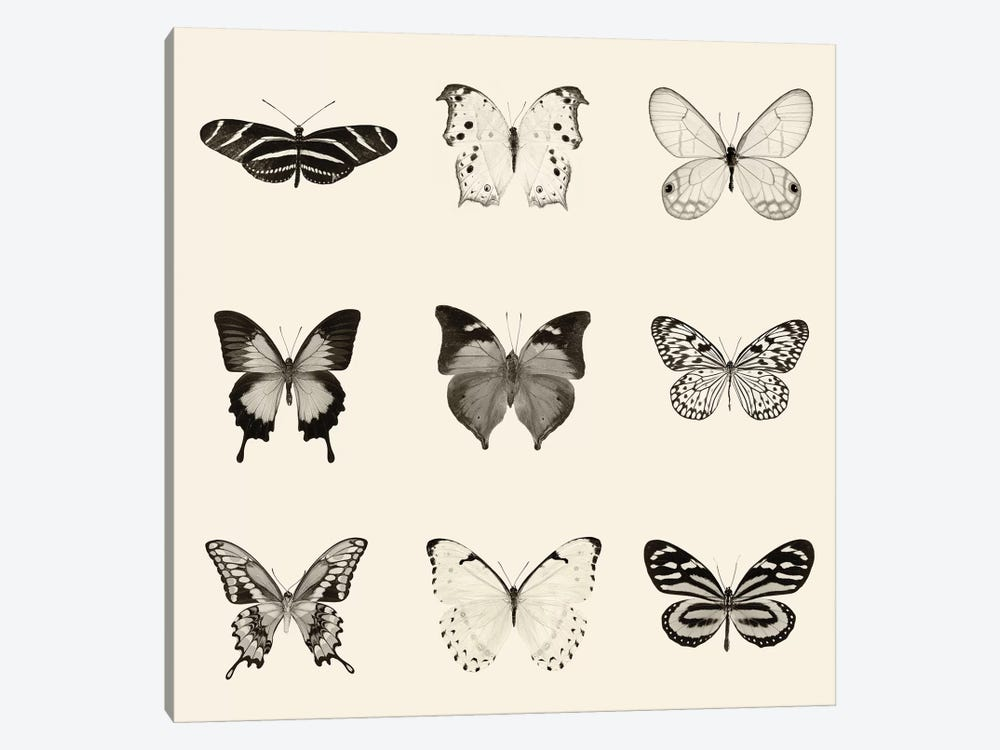 Butterfly Patch In B&W by Debra Van Swearingen 1-piece Canvas Art