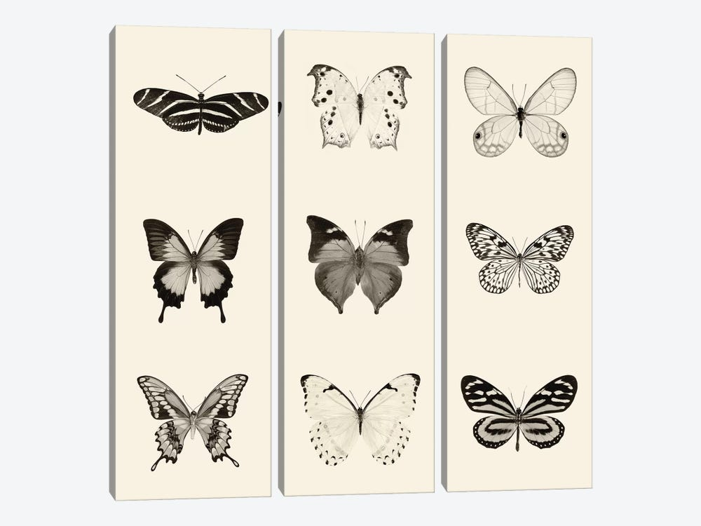 Butterfly Patch In B&W by Debra Van Swearingen 3-piece Canvas Art
