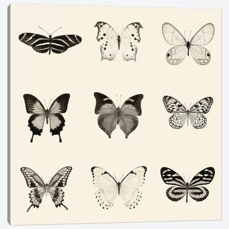 Butterfly Patch In B&W Canvas Print #WAC6551} by Debra Van Swearingen Canvas Artwork
