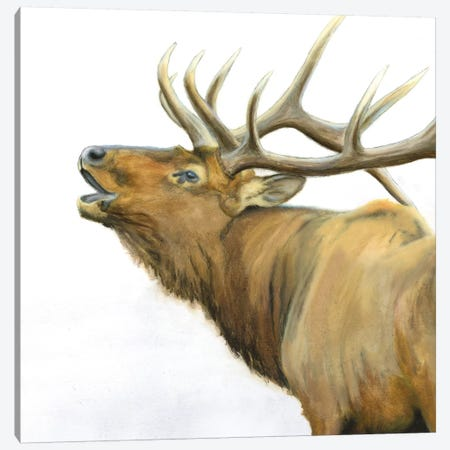 Majestic Brown Elk Canvas Print #WAC6552} by James Wiens Canvas Artwork