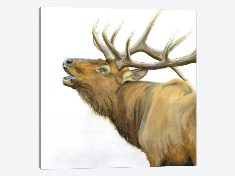 Majestic Brown Elk by James Wiens 1-piece Canvas Print