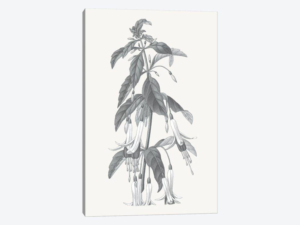Neutral Botanical I by Wild Apple Portfolio 1-piece Canvas Print