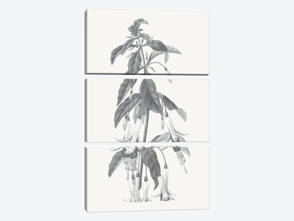 Neutral Botanical I by Wild Apple Portfolio 3-piece Art Print
