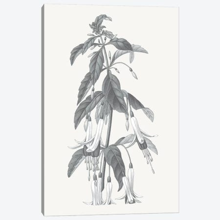 Neutral Botanical I Canvas Print #WAC6572} by Wild Apple Portfolio Canvas Art
