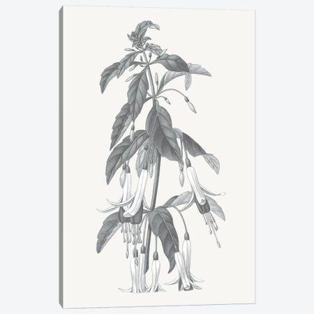 Neutral Botanical I Canvas Print #WAC6572} by Wild Apple Portfolio Canvas Art