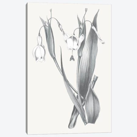 Neutral Botanical II Canvas Print #WAC6573} by Wild Apple Portfolio Canvas Artwork