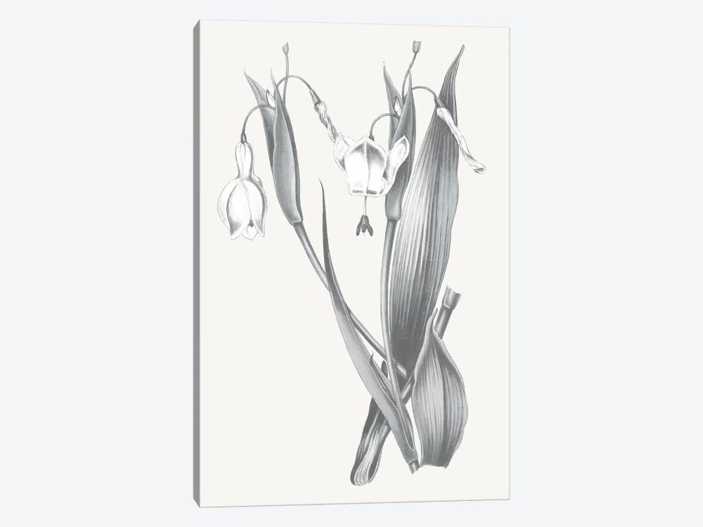 Neutral Botanical II by Wild Apple Portfolio 1-piece Canvas Wall Art