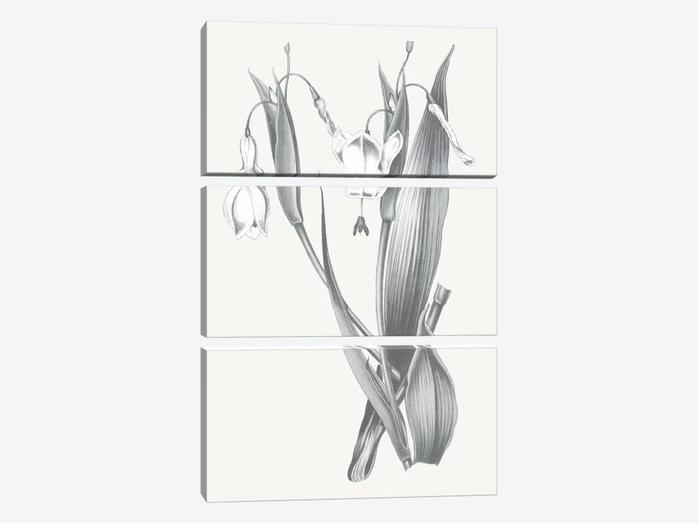 Neutral Botanical II by Wild Apple Portfolio 3-piece Canvas Wall Art