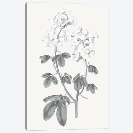 Neutral Botanical III Canvas Print #WAC6574} by Wild Apple Portfolio Art Print