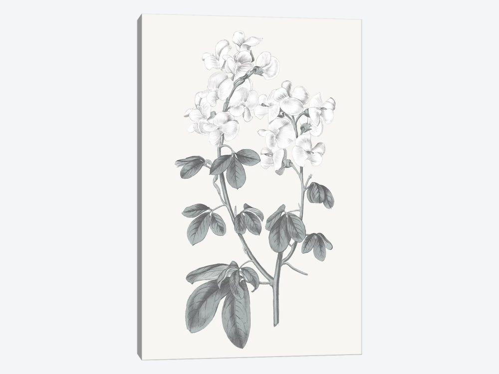 Neutral Botanical III by Wild Apple Portfolio 1-piece Canvas Art Print