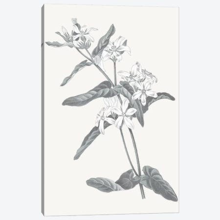 Neutral Botanical IV Canvas Print #WAC6575} by Wild Apple Portfolio Canvas Art Print