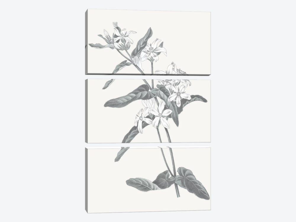 Neutral Botanical IV by Wild Apple Portfolio 3-piece Canvas Artwork