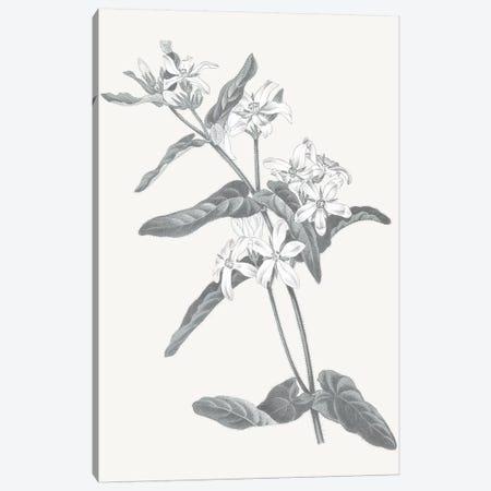 Neutral Botanical IV Canvas Print #WAC6575} by Wild Apple Portfolio Canvas Art Print