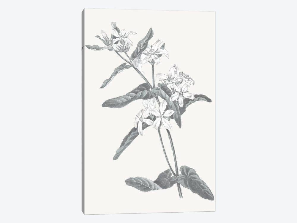 Neutral Botanical IV by Wild Apple Portfolio 1-piece Canvas Artwork