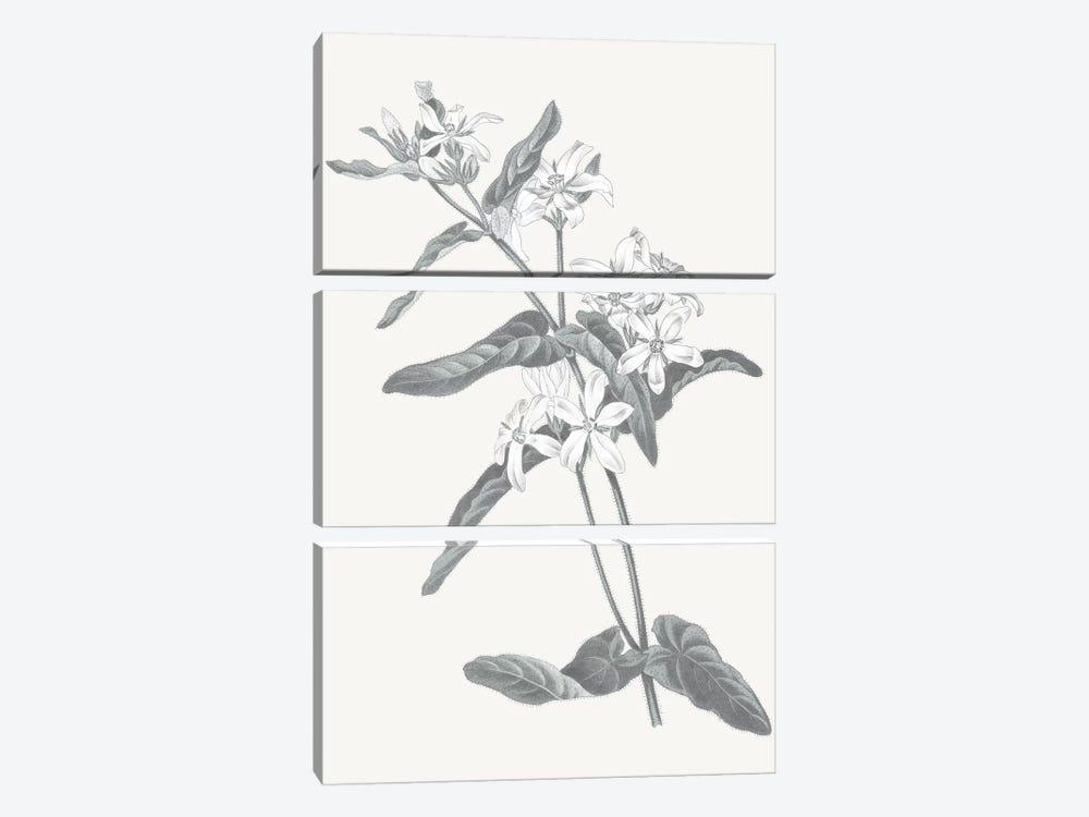 Neutral Botanical IV by Wild Apple Portfolio 3-piece Canvas Artwork