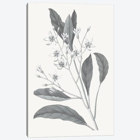 Neutral Botanical V Canvas Print #WAC6576} by Wild Apple Portfolio Art Print