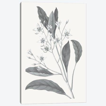 Neutral Botanical V Canvas Print #WAC6576} by Wild Apple Portfolio Art Print