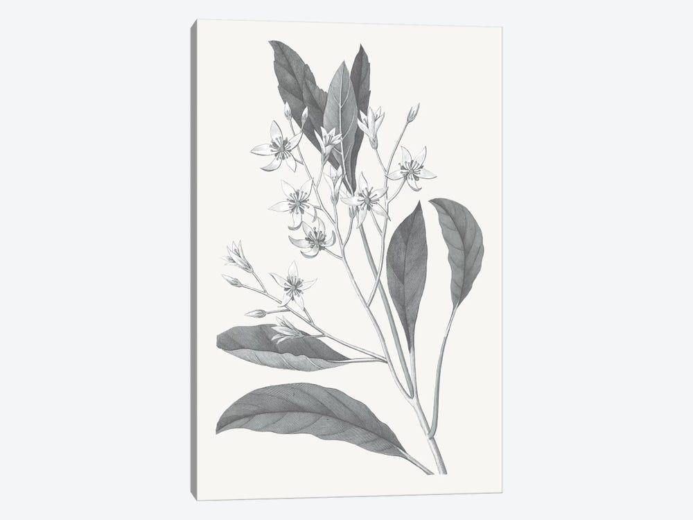 Neutral Botanical V by Wild Apple Portfolio 1-piece Canvas Art Print
