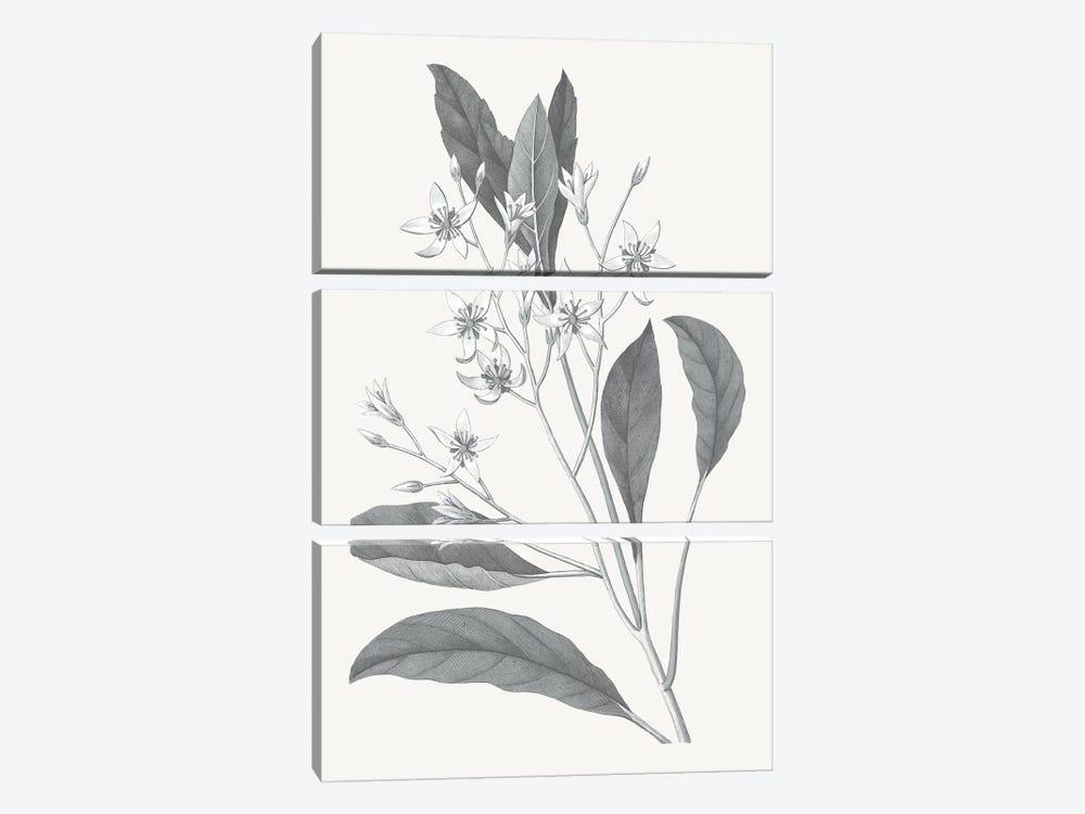 Neutral Botanical V by Wild Apple Portfolio 3-piece Canvas Print