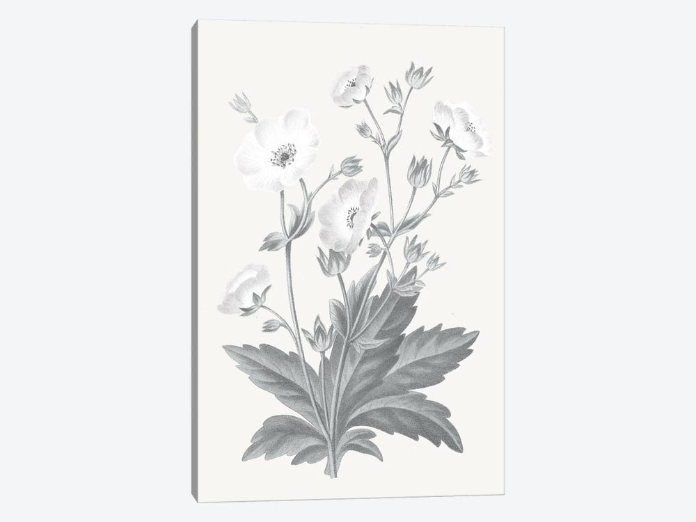 Neutral Botanical VI by Wild Apple Portfolio 1-piece Canvas Art
