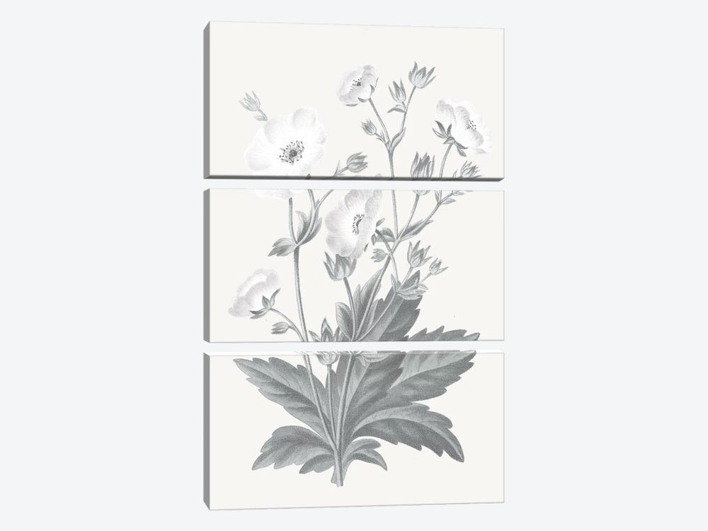 Neutral Botanical VI by Wild Apple Portfolio 3-piece Canvas Art