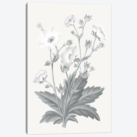 Neutral Botanical VI Canvas Print #WAC6577} by Wild Apple Portfolio Canvas Print