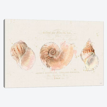 Shell Collector I Canvas Print #WAC6619} by Katie Pertiet Canvas Art Print